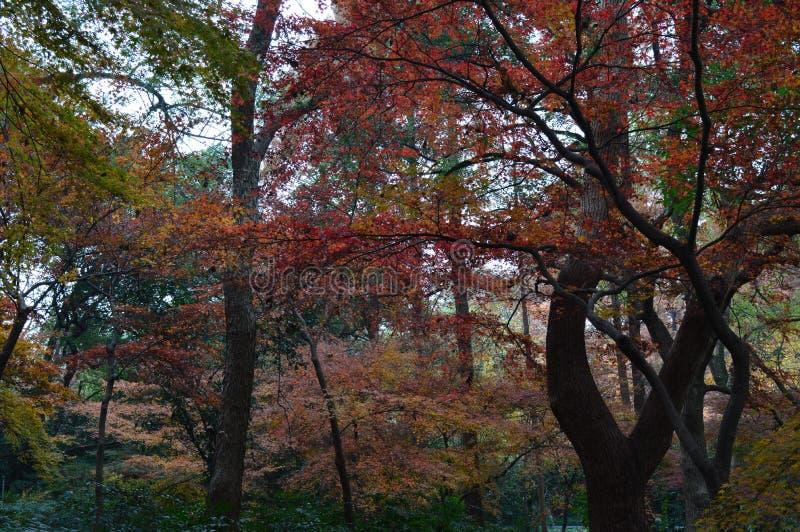 осень золотистая стоковое фото rf