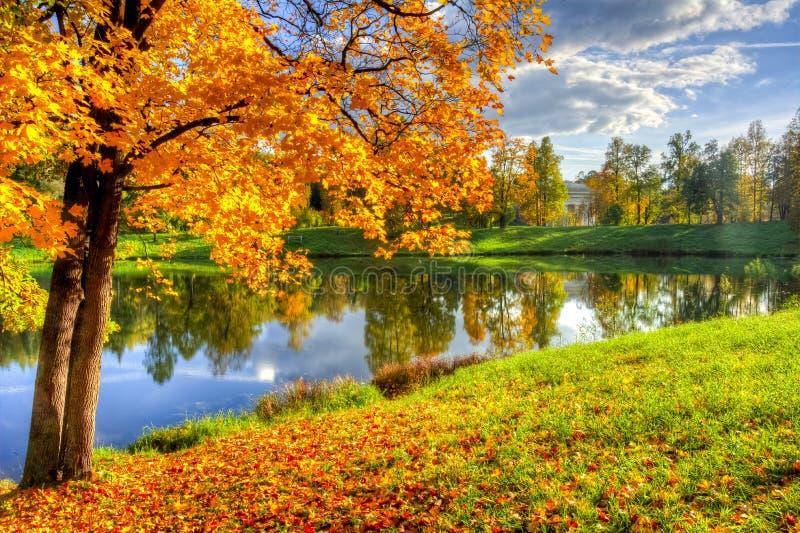 Осень золотого падения спелая в парке Pavlovsky, Павловск, Санкт-Петербург, Россия стоковые фото