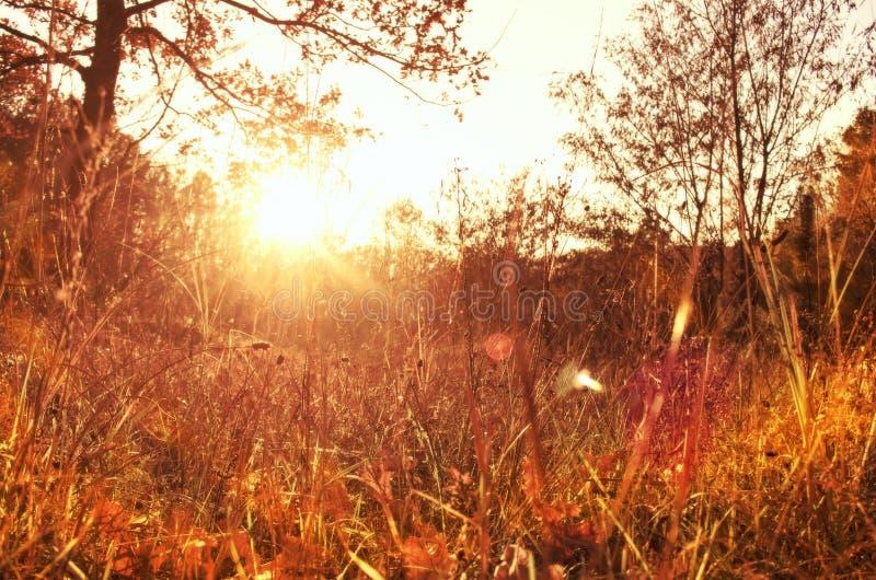 Осень золота с солнечным светом стоковые изображения