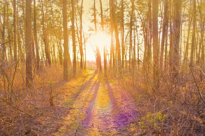 Осень золота с солнечным светом стоковые фотографии rf