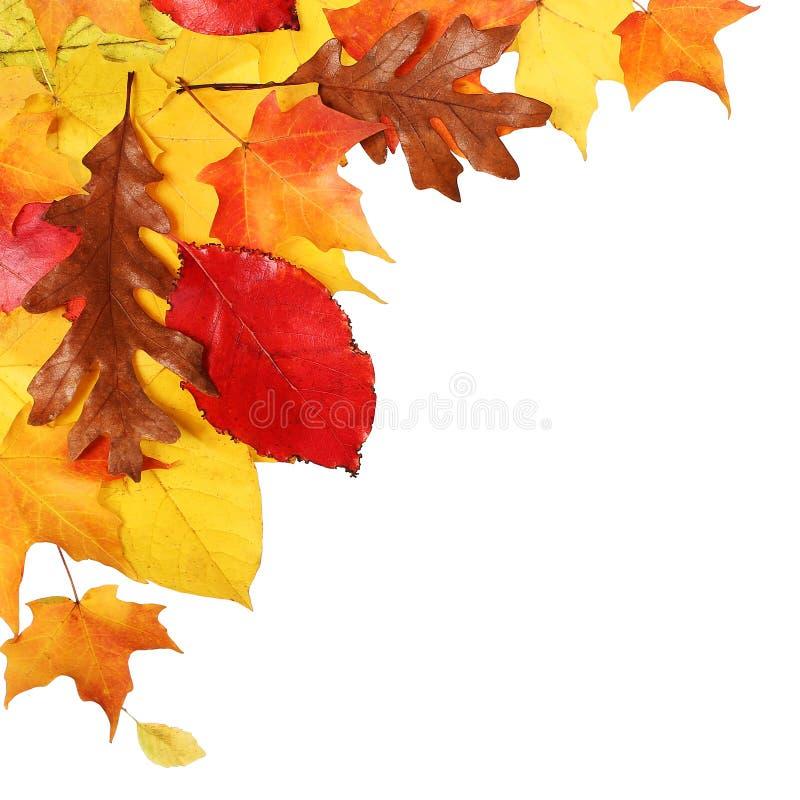осень изолировала листья падение стоковые изображения