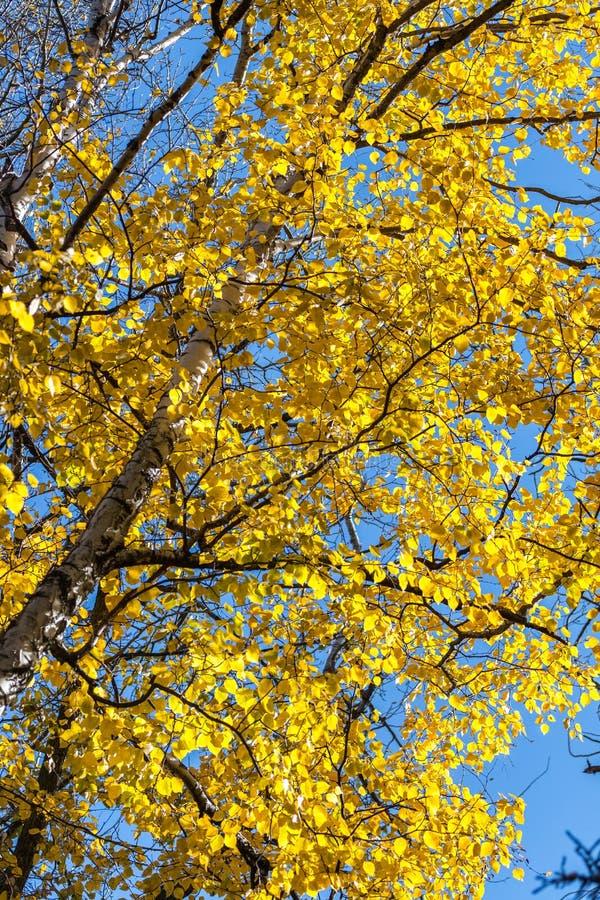 Download осень листает желтый цвет стоковое изображение. изображение насчитывающей bluets - 81808869