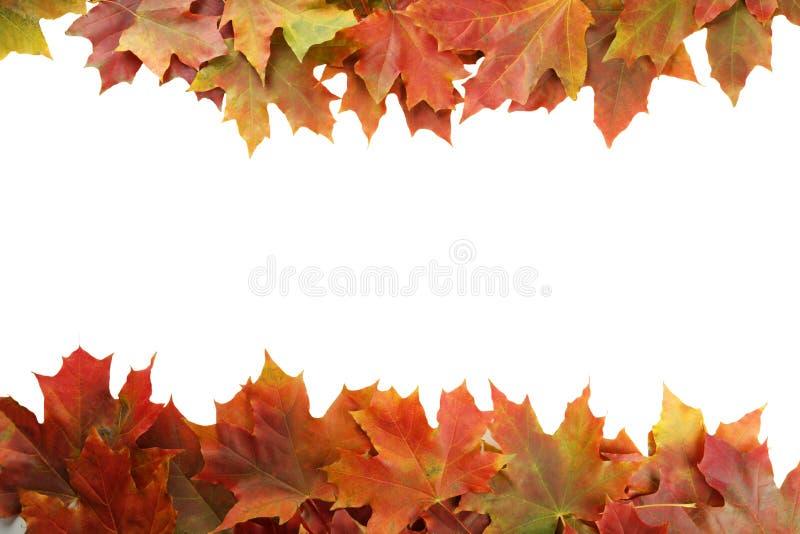 Осень листает рамка на белой предпосылке стоковая фотография