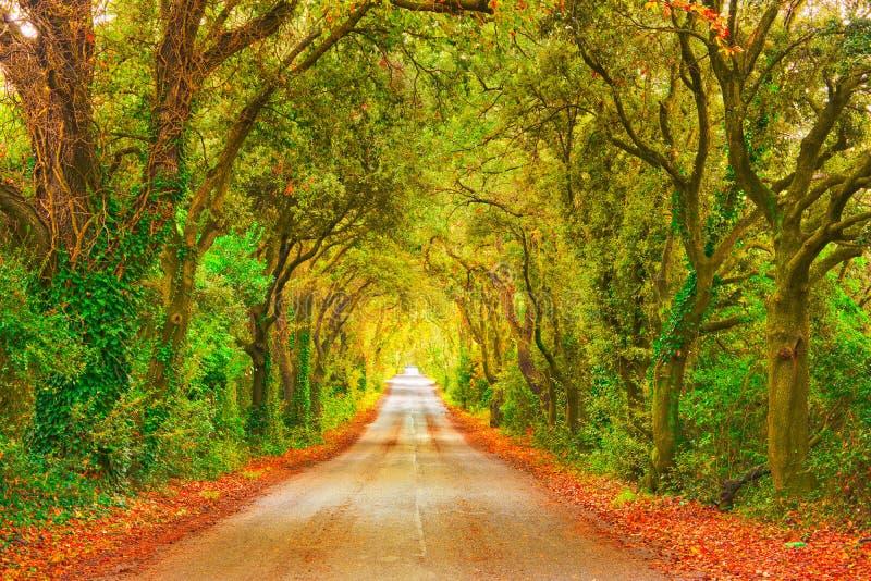 Осень или падение, дорога дерева прямая на заходе солнца Maremma, Тоскана, стоковые фотографии rf