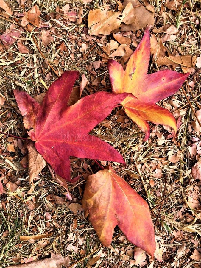 Осень и листья стоковое изображение