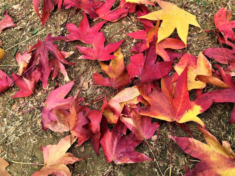 Осень и листья стоковые фотографии rf