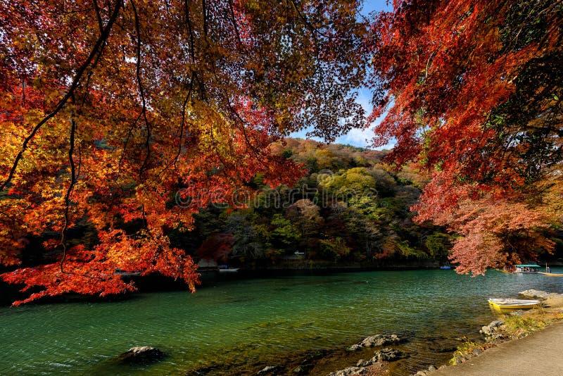 Осень Киото стоковое фото rf