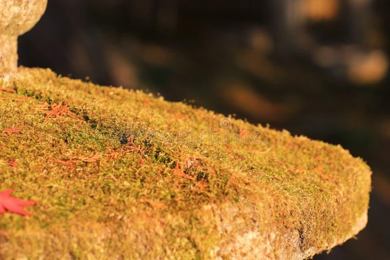 осень кленовых листов красочная на Zuiganzan Enkouji стоковое фото rf
