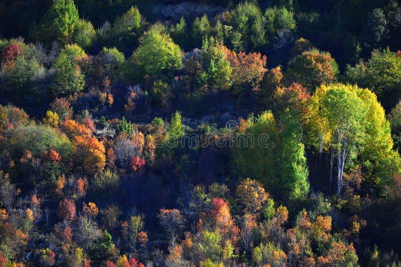 осень красит гору стоковые фотографии rf