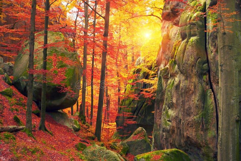 осень красит золотистыми стоковое изображение