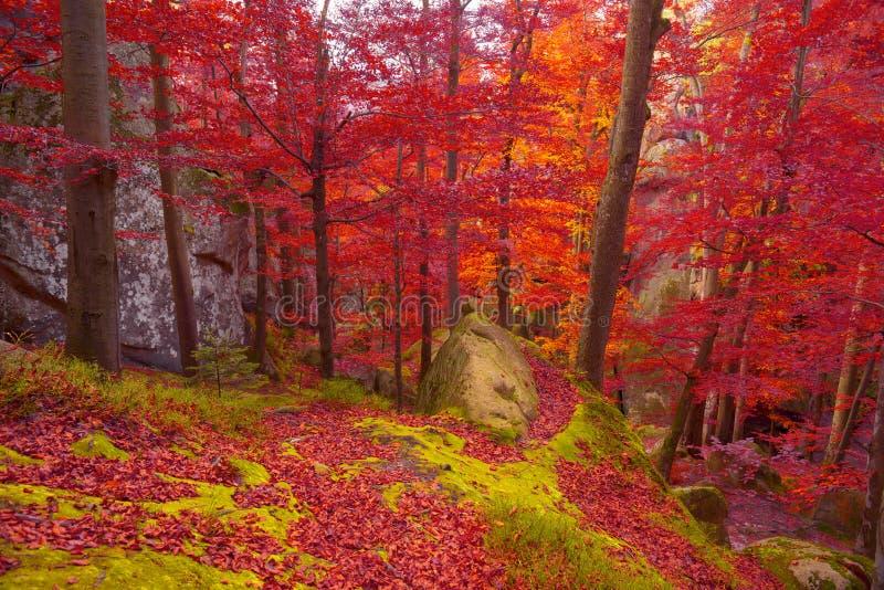 осень красит золотистыми стоковые изображения rf