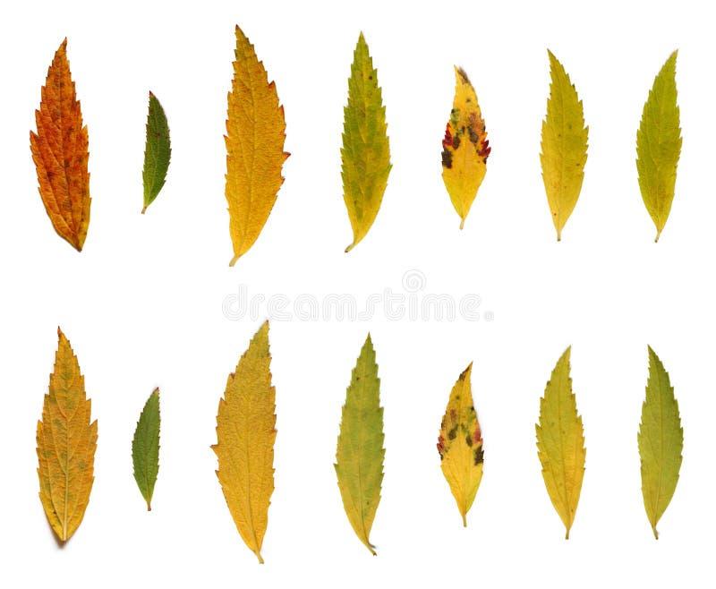 осень красит листья стоковые фотографии rf