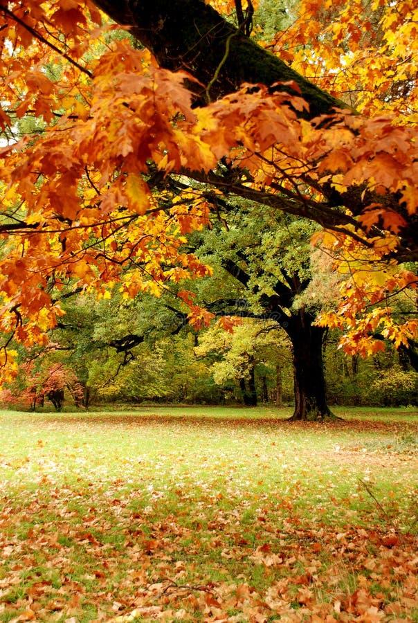 осень красит пущу стоковая фотография
