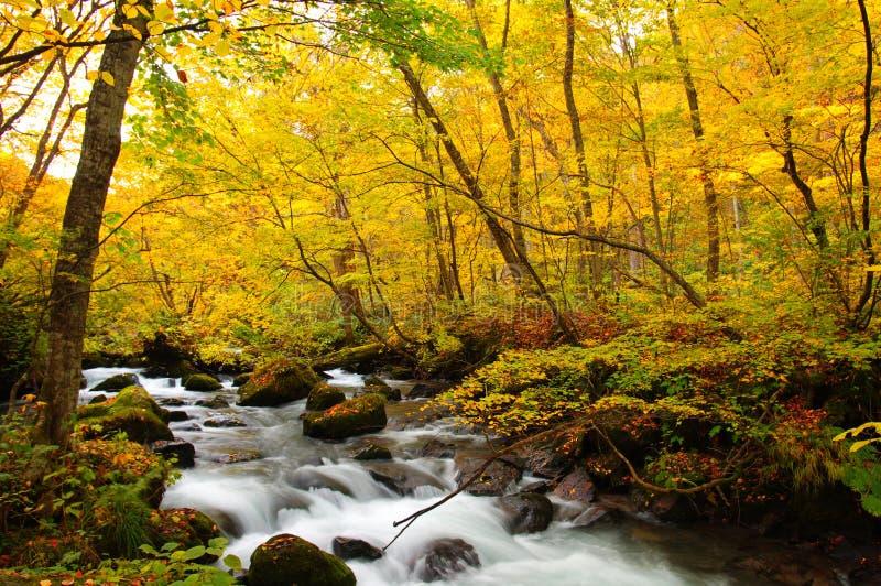 осень красит реку oirase стоковые фотографии rf