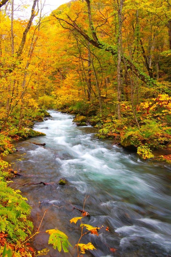 осень красит реку oirase стоковые фото