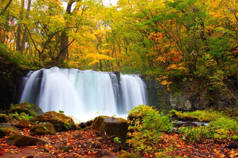 осень красит реку oirase стоковое изображение rf