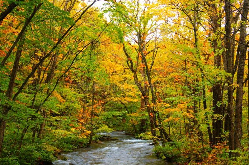 осень красит реку oirase стоковая фотография rf