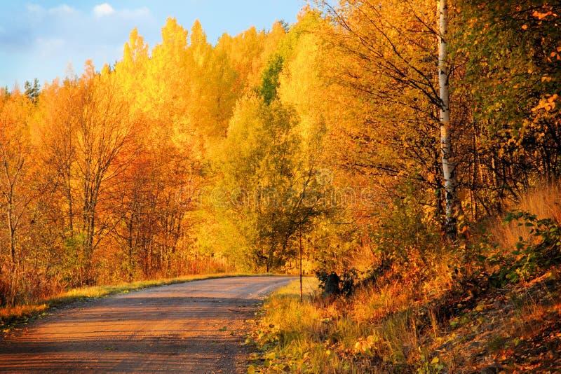 осень красит Финляндию стоковое изображение rf