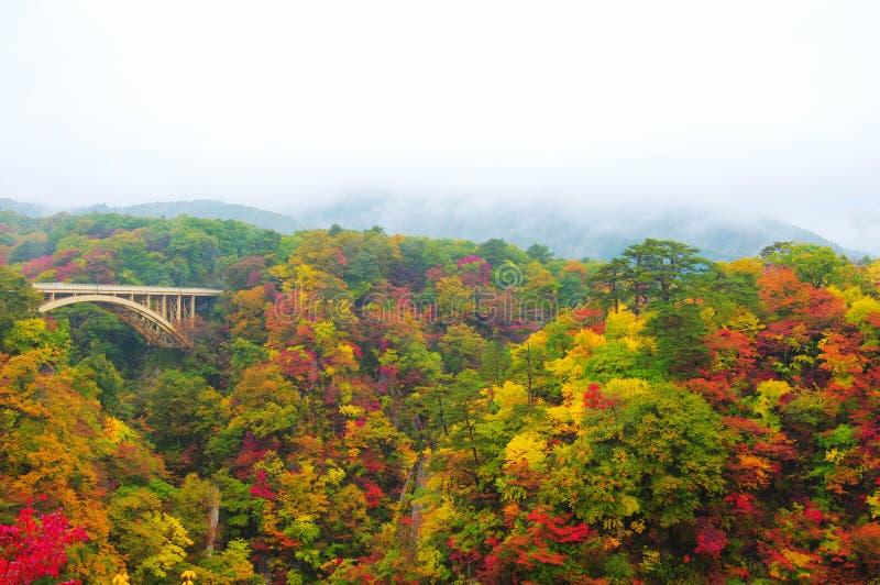 осень красит naruko gorge стоковые изображения