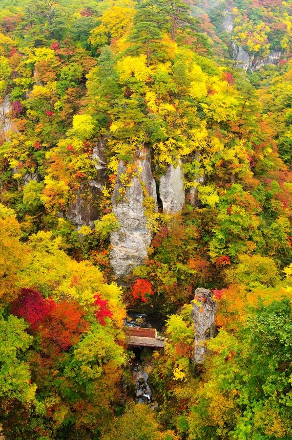осень красит naruko gorge стоковое фото rf