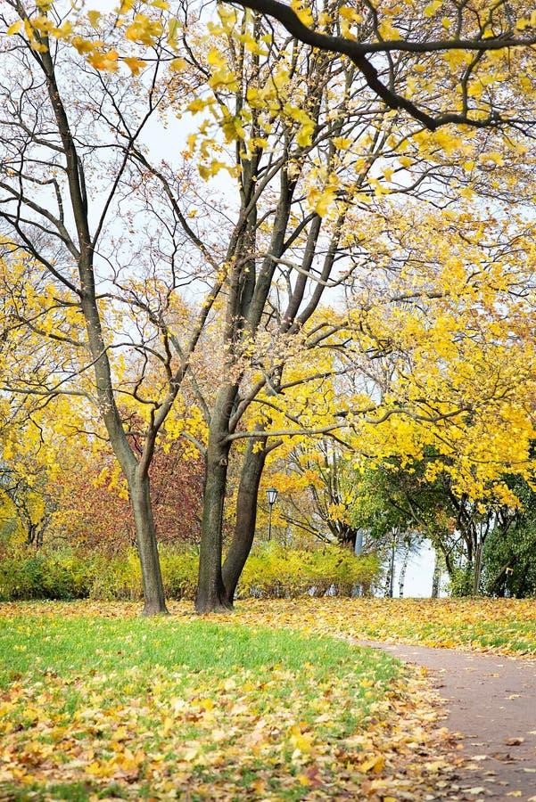 Осень, ландшафт падения Апельсин, красочная листва Парк стоковая фотография