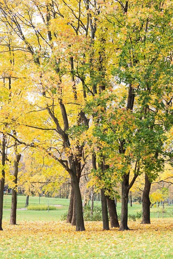 Осень, ландшафт падения Апельсин, красочная листва Парк стоковое изображение rf