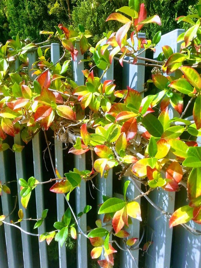 Осень: листья желтых и красного цвета стоковые фото