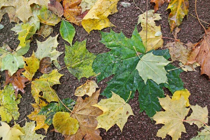 Осень листья иллюстрации компьютера предпосылки осени стоковые фотографии rf