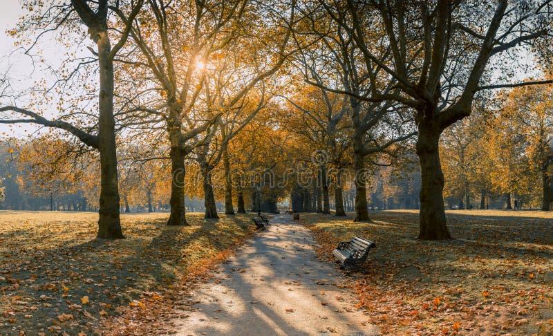Осень на зеленом парке стоковая фотография rf