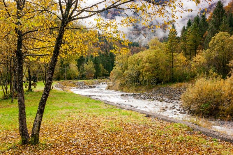 Осень на кровати сухих листьев стоковое изображение rf