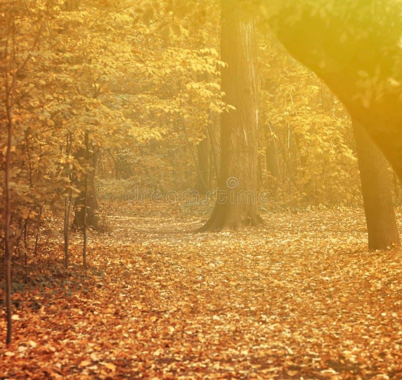 Осень на лесе стоковые фотографии rf