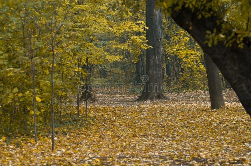Осень на лесе стоковые изображения rf
