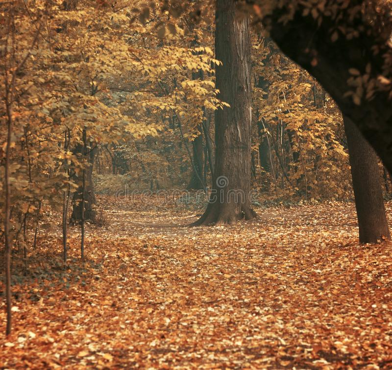 Осень на лесе стоковые изображения