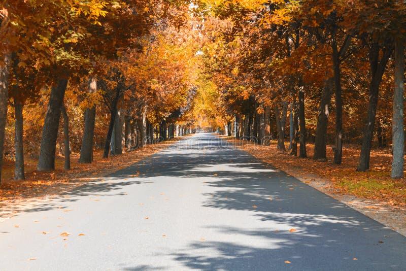 Осень на дороге стоковые фотографии rf