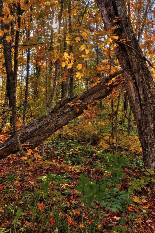 Осень на пике Carlton гор Sawtooth в северной Минесоте на северном береге Lake Superior стоковые изображения rf