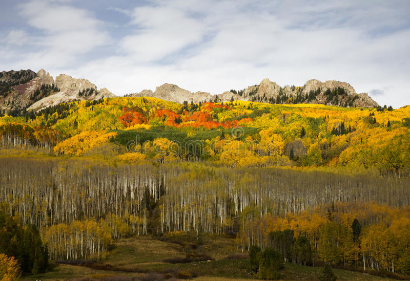 Осень на пропуске Kebler в Колорадо стоковые фотографии rf
