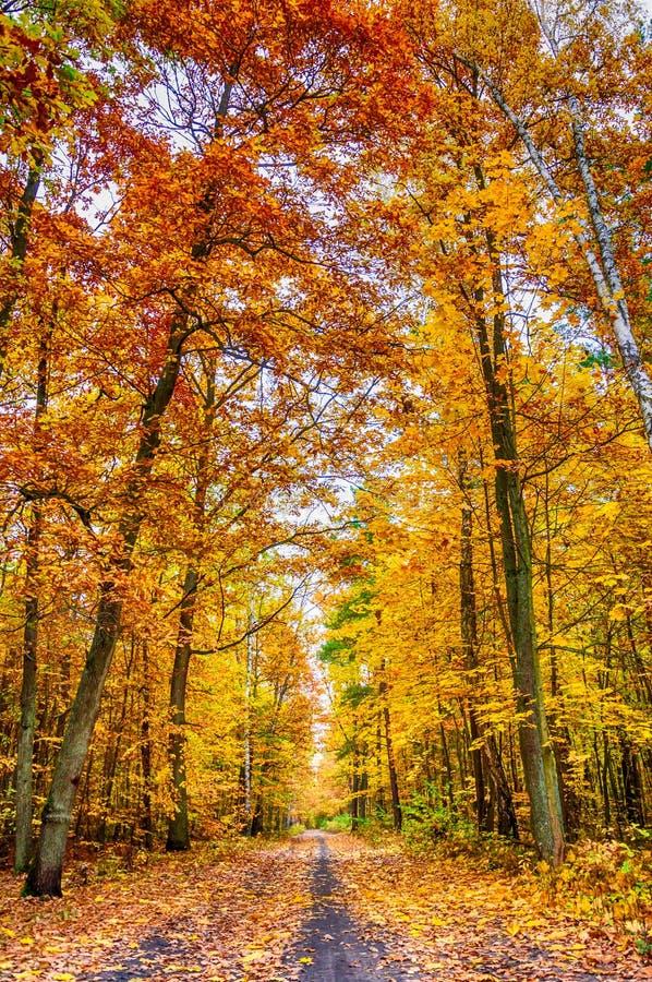 Осень на пути леса II стоковая фотография