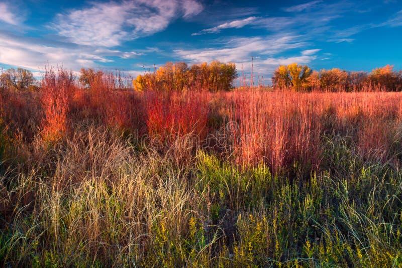 Осень на равнинах Колорадо стоковые фотографии rf