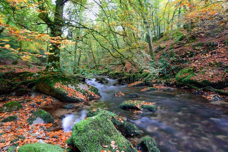 Осень на реке Plym стоковые изображения