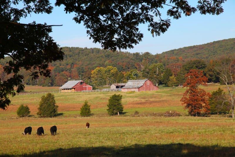 Осень на скотоводческом ранче в пилотной ручке, Миссури стоковое изображение