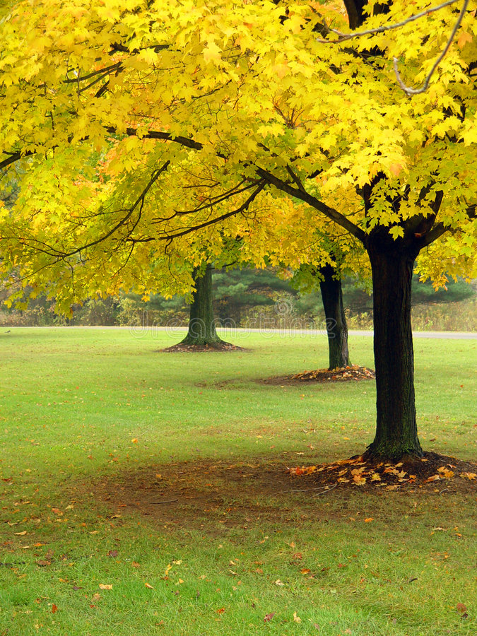 осень Огайо Стоковая Фотография RF