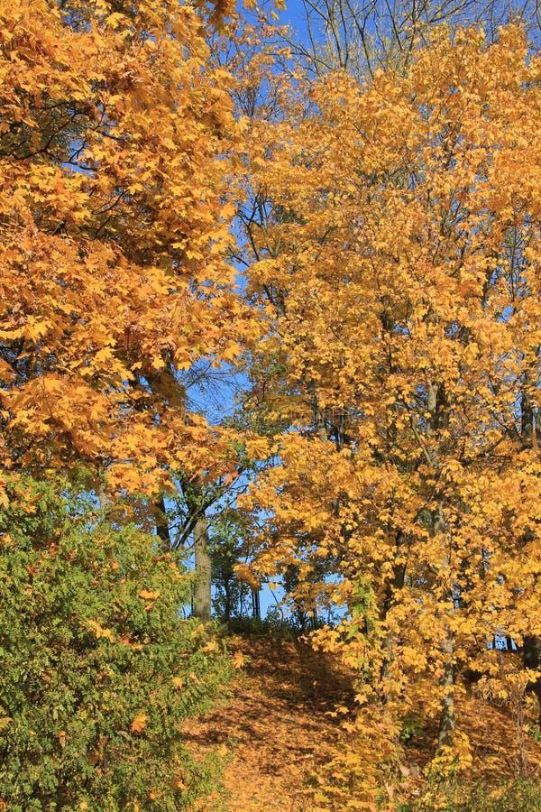 Осень одно стоковое фото