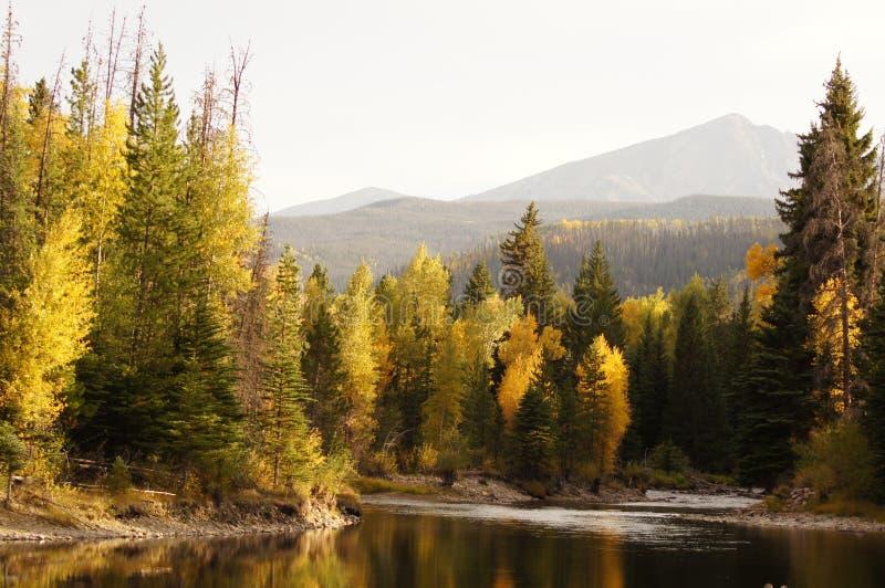 осень осины стоковые фото