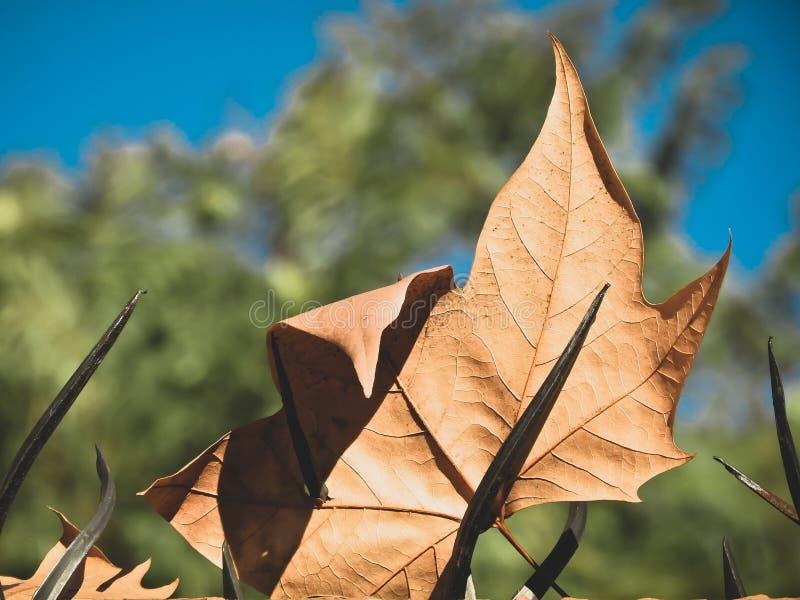 Осень оставляет цвет коричневым с зеленым фоном дерева стоковое фото rf