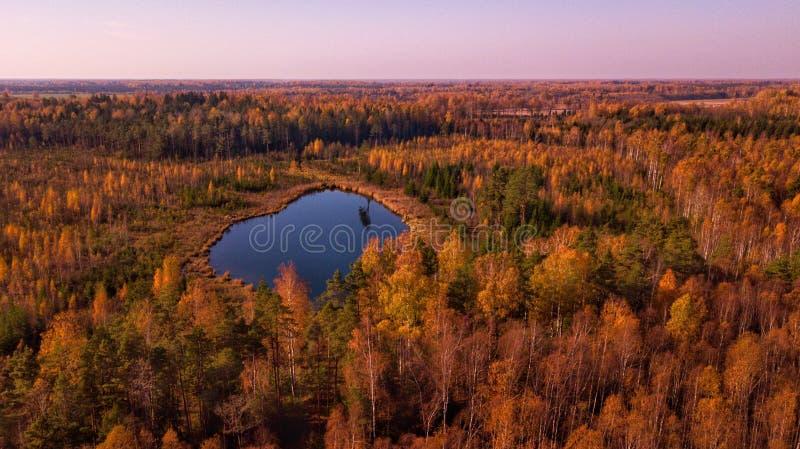 Осень от глаза птицы высокого стоковые изображения