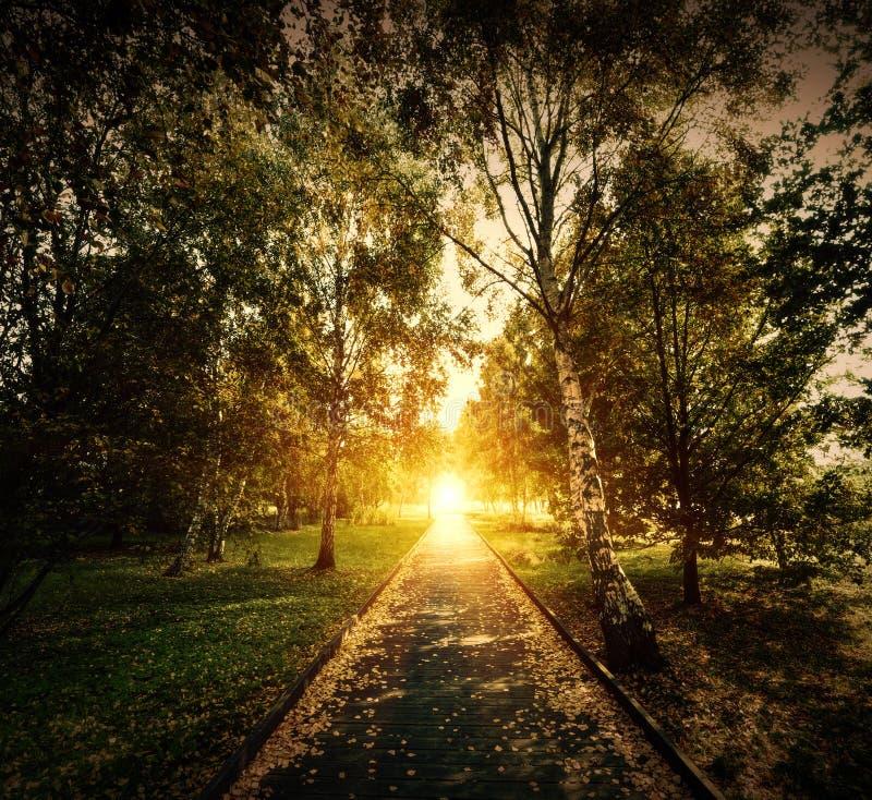 Осень, парк падения. Деревянный путь к солнцу стоковая фотография