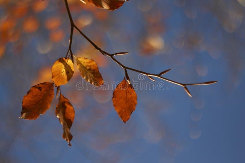 Осень/падение выходят Bokeh стоковые фото