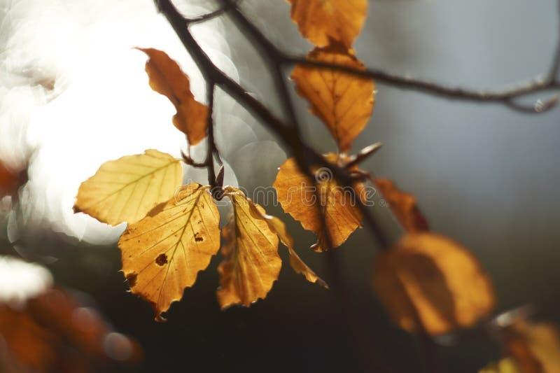 Осень/падение выходят Bokeh стоковое фото rf