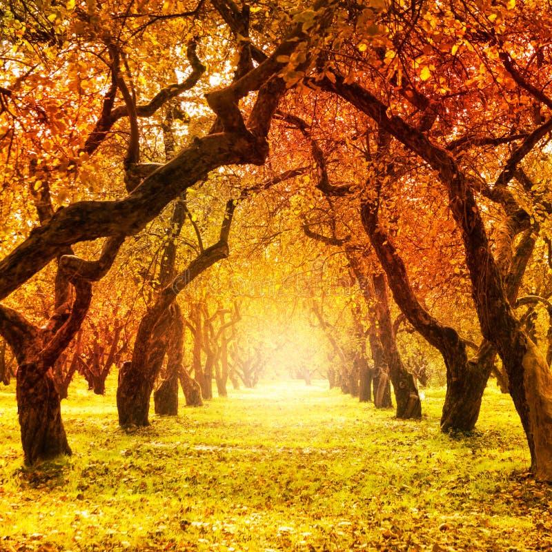 Осень. Падение. Осенний парк стоковая фотография