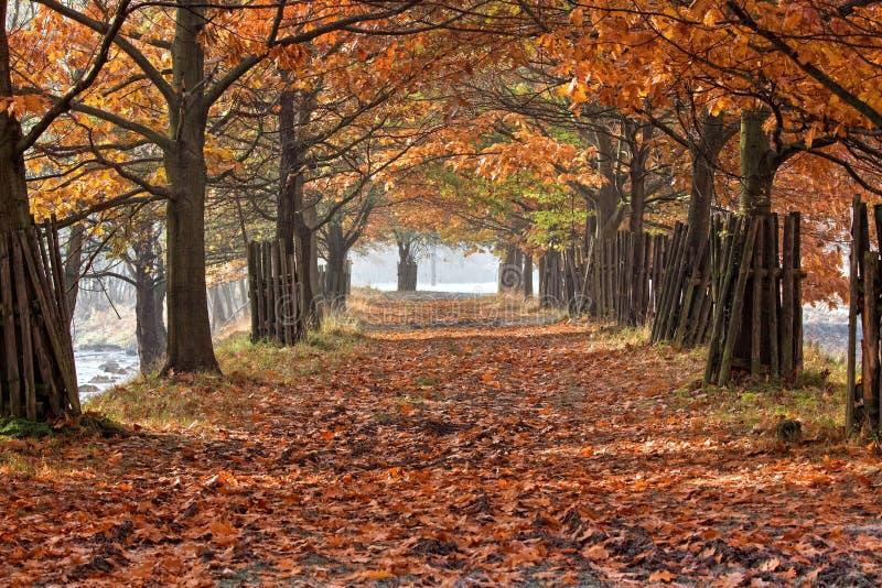 осень переулка стоковое фото